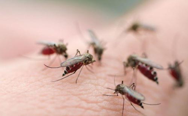 Gần 1.900 người mắc bệnh sốt xuất huyết